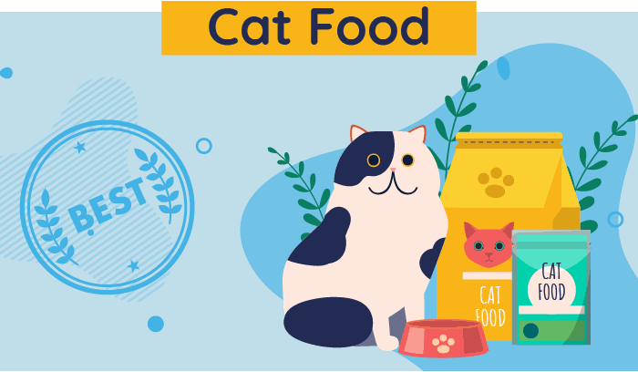 4 Types of Cat Food and How to Choose the Right One